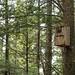 Barred Owl by laszlofromhalifax