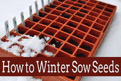Winter Sowing