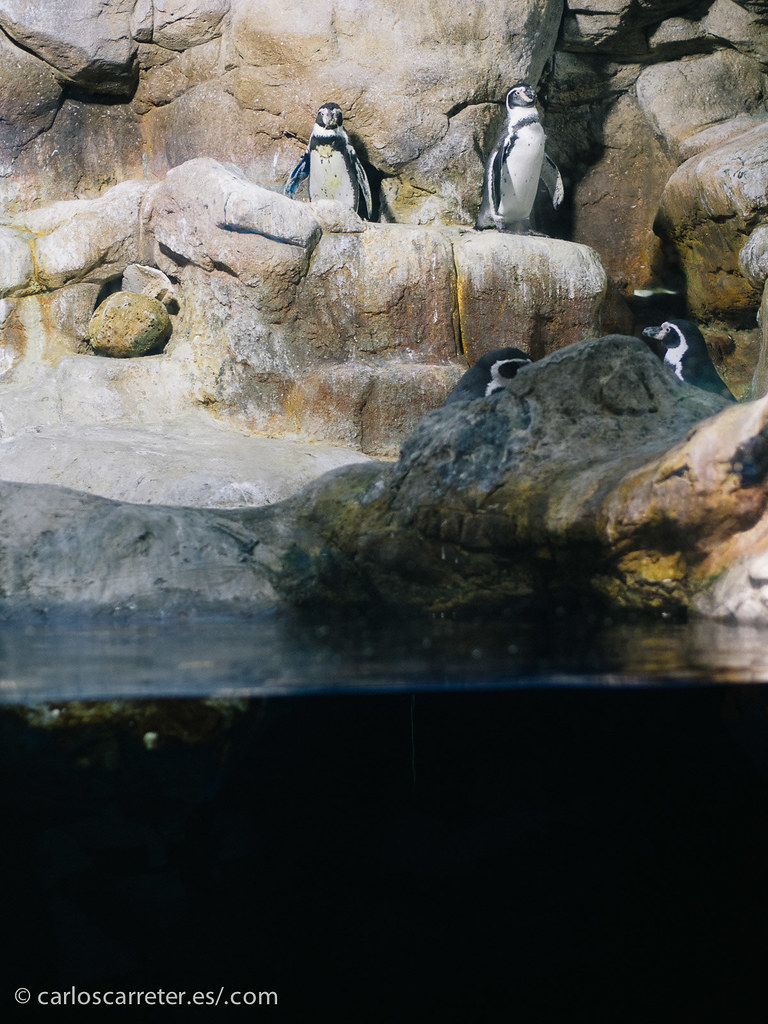 Aquarium de Barcelona