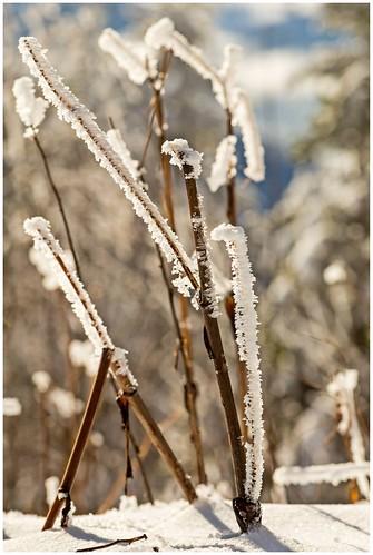 Winterzauber auf der Hornisgrinde