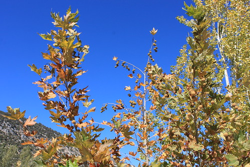 20131010_7041-blue-sky-autumn-tints