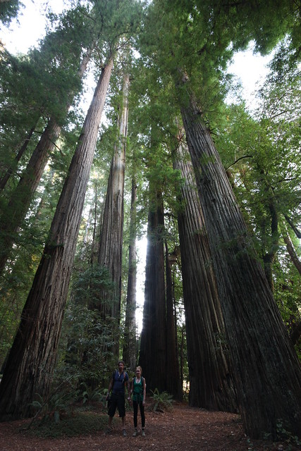 Us to give you the scale of the Redwoods of Northern California.