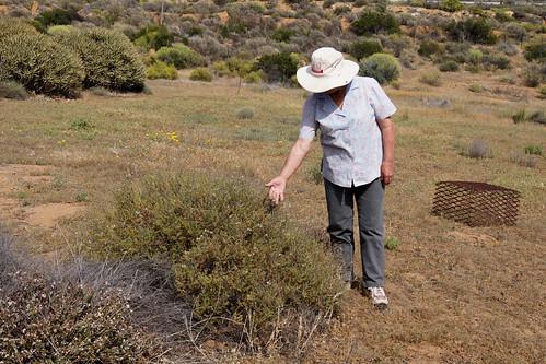 Lita Cole near bush of Pelargonium tragacanthoides