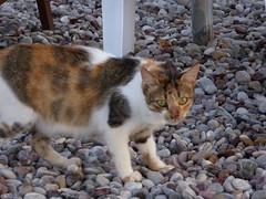 ΓΑΤΕΣ / CATS