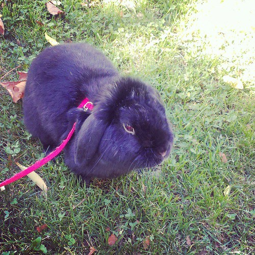 Chillin in the park with the bun bun