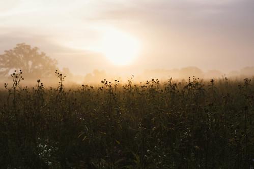 autumn fall nature wisconsin canon landscape unitedstates 2014 waunakee vsco vscofilm vscofilm05
