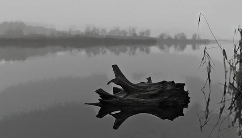 winter lake reflection nature fog landscape artphotography