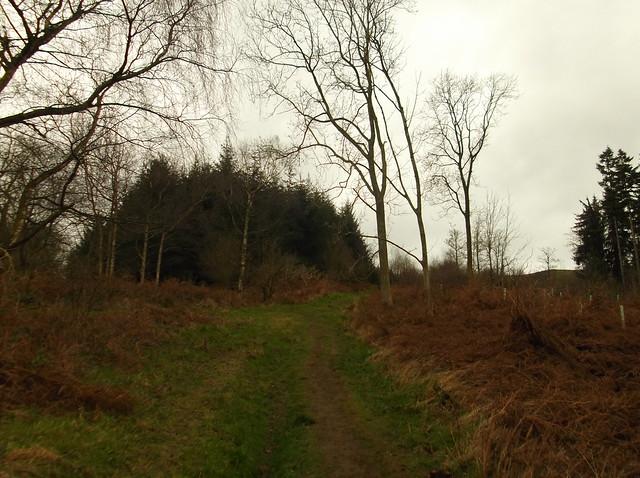 breidden hill 016