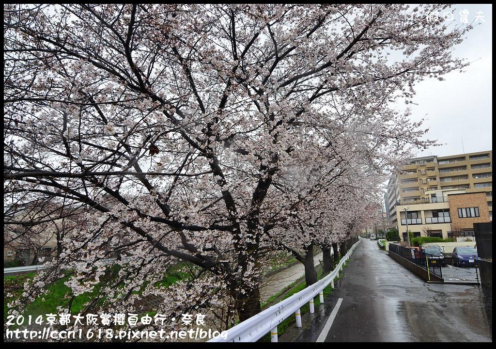 2014京都大阪賞櫻自由行.奈良DSC_0821