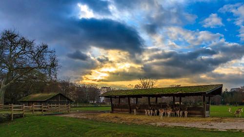 sunset sky cloud sun nature animals automne lyon doe