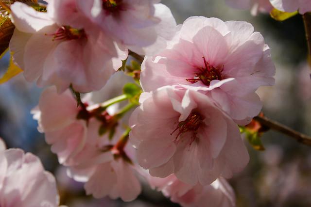 2014-04-19_00196_美の山.jpg