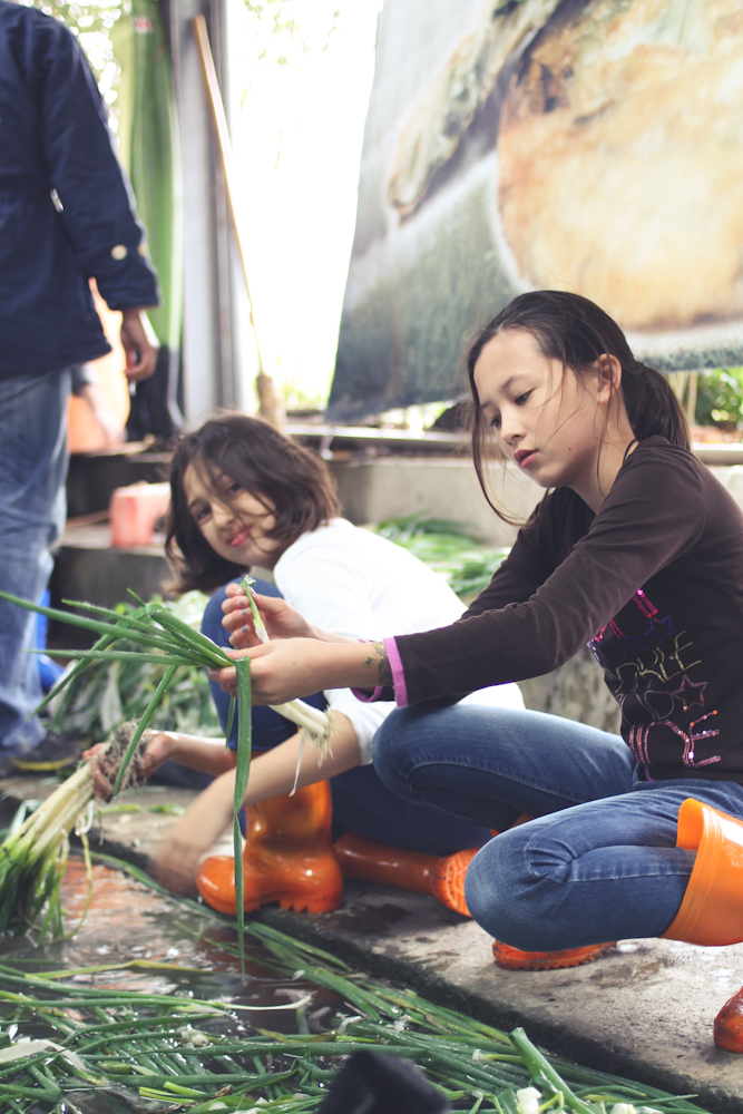 Yilan Spring Onion Country-9