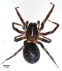 arthropod, animal, spider, araneus, invertebrate, fauna, wolf spider,