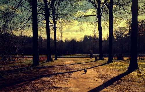 park trees dog pet chihuahua holland netherlands clouds walk january picasa 365 iphone project365 365days justaroundthecorner 365daysproject 167365 iphoneography
