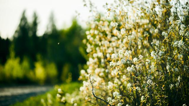 Roadside Blooms