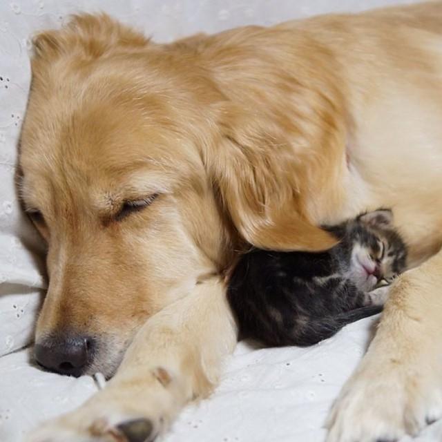 unusual-animal-friendship-53__880