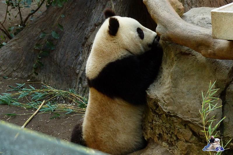 San Diego Zoo 10.11.2014 208