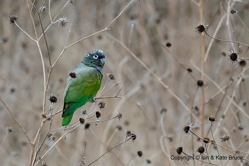 Autor: Ian.Kate.Bruces Wildlife