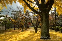 JeromeLim-2356
