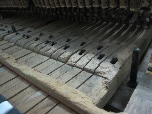 鋼琴的蟲害-老鼠