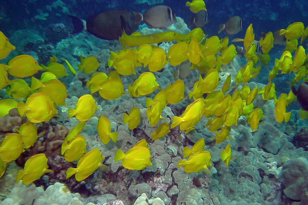 yellow group