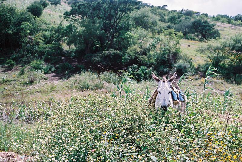 Mezcal trail