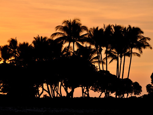 sunset tree gold hawaii palm stay