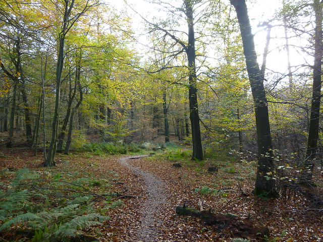 Day 5 - Dalby forest (21)
