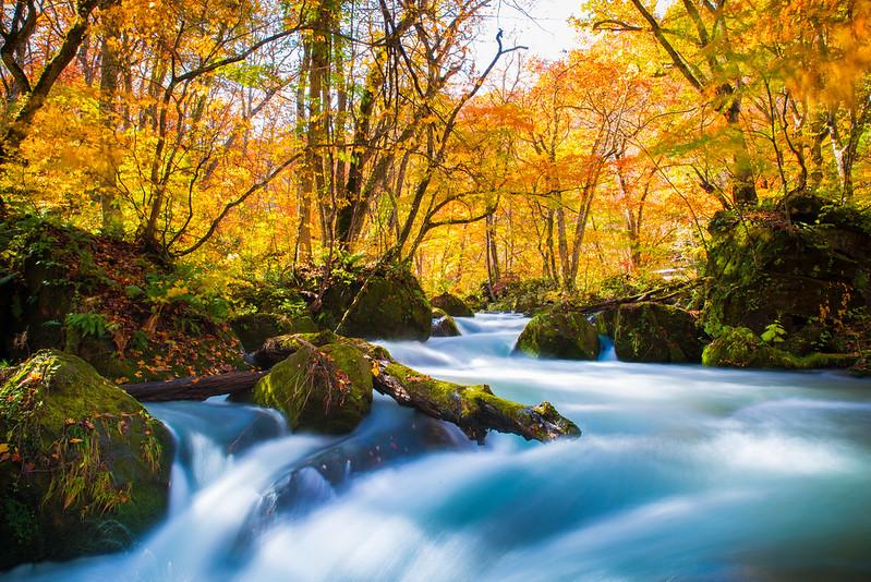 日本 青森–東北之旅–奧入瀨溪流Oirase Mountain Stream(中)