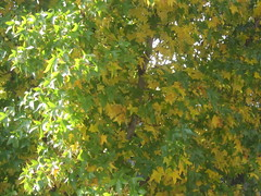 Yellow and Green Leaves Background