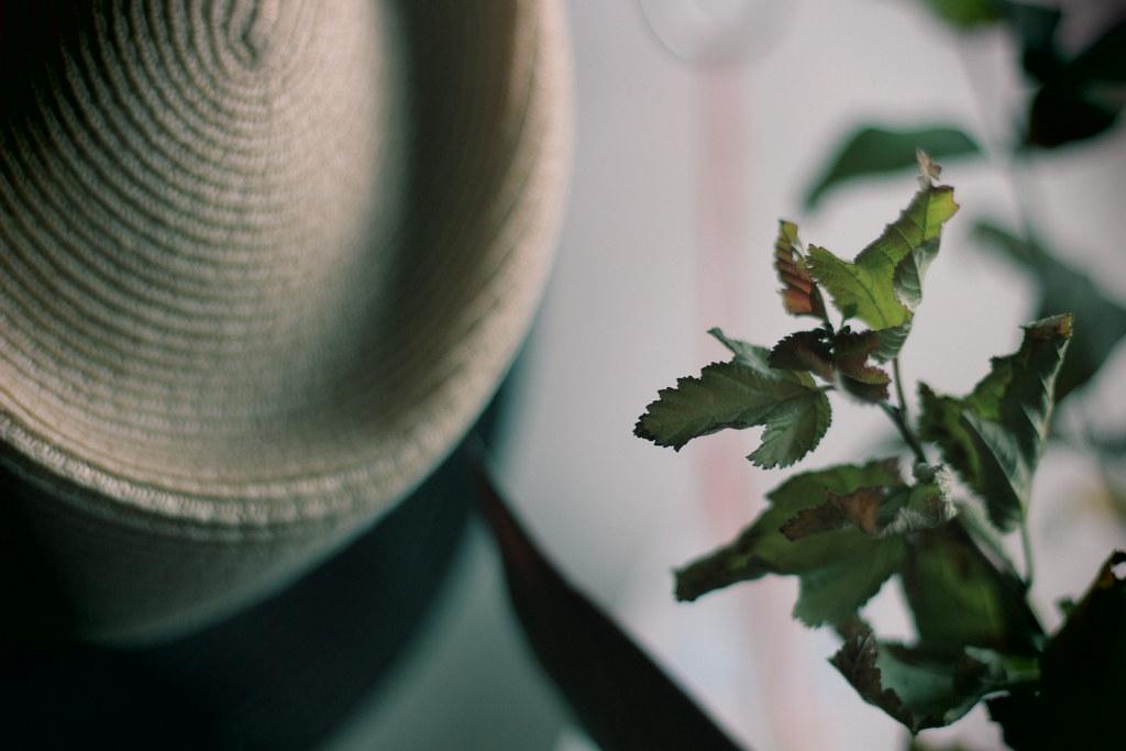 麦わら帽子と草