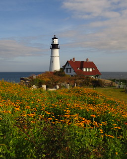 Portland Headlight perspective with yellow flowers in the foreground - EXPLORED, THANK YOU!