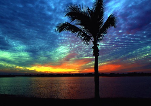 blue sunset red usa lake reflection fall nature beauty skyscape landscape colorful unitedstates natural florida horizon shoreline palmtree curve cloudscape coconutpalm southflorida afterglow sawgrass naturephotography palmbeachcounty lakescape supershot tropicalholiday thesunshinegroup artisticsunsetphotography offcentertreeplacement