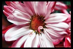 FloralI