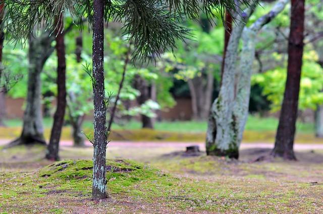Mossy trees at Ninnaji