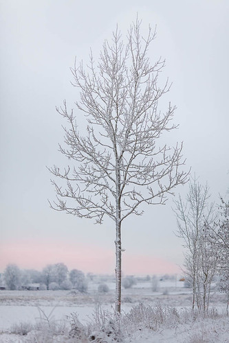 winter light snow tree ice clouds landscape frozen bokeh