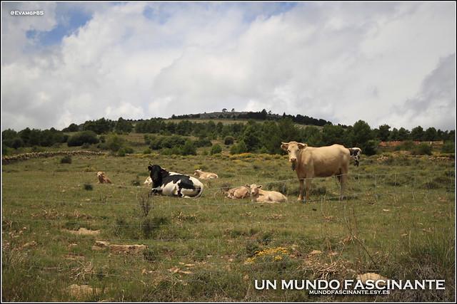 Paisajes de Aragón