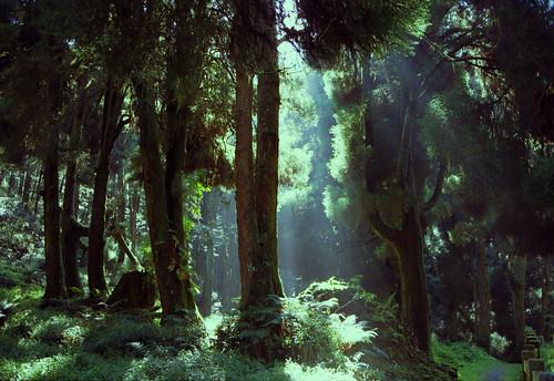 film analog forest nikon kodak fe nikkor nikonfe 阿里山 步道 底片 colorplus200 crystalscan7200 kodakfilms afnikkor35mmf20 7250u primefilm7250u 大塔山步道