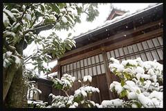 日本京都-金閣寺-雪.59