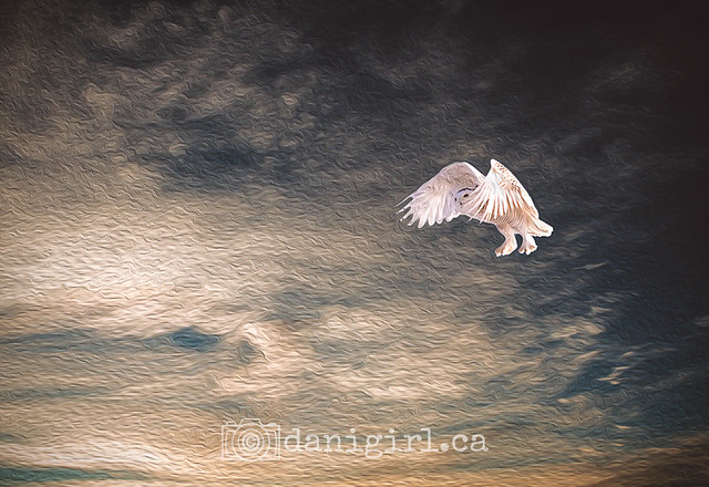 photo of a snowy owl against the sunset