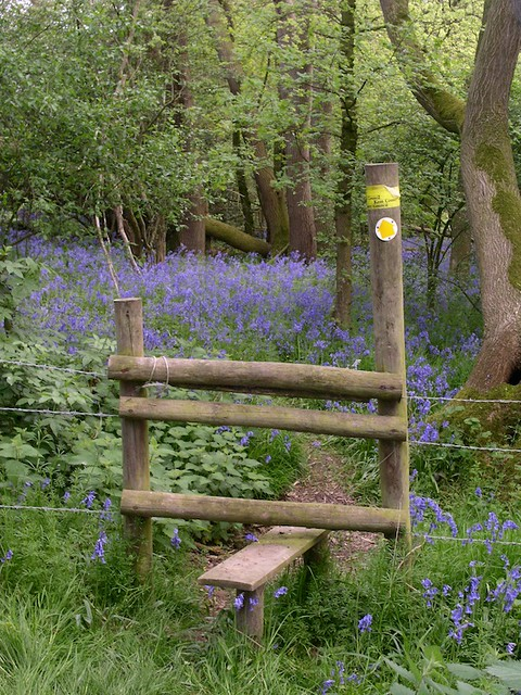 Bluebell wood in Kent