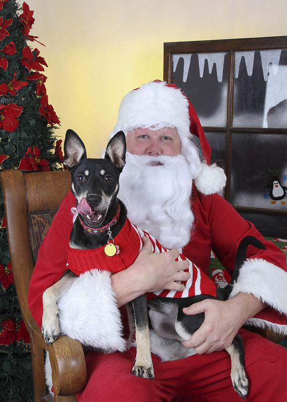 Olive & Santa