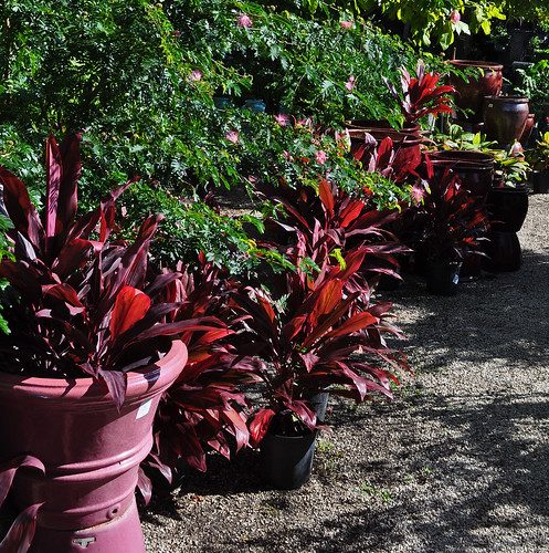 Matched Pots and Foliage
