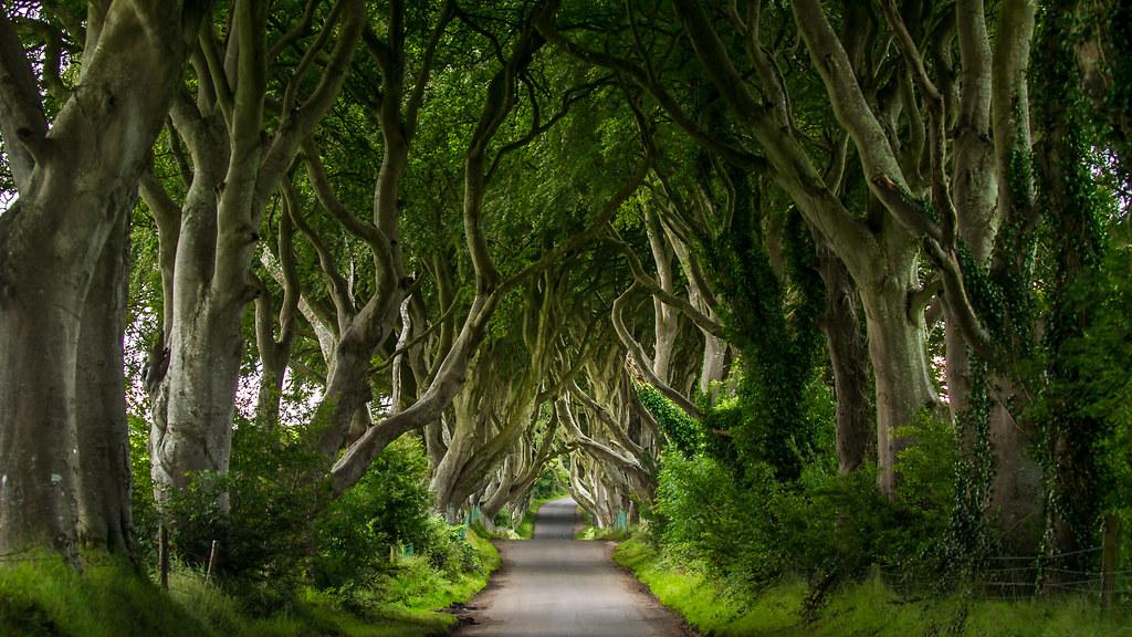 Dark Hedges, Northern Ireland (GS)