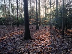 Forstbotanischer Garten Köln