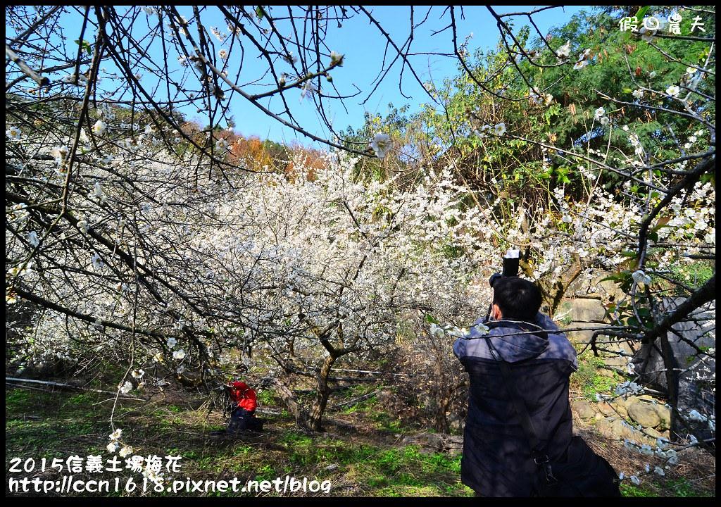 2015信義土場梅花DSC_9333