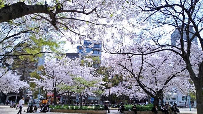 6 大阪賞櫻景點 堀江公園 味處和風亭