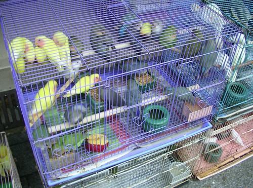 Picture 19 Yuen Po Street Bird Garden