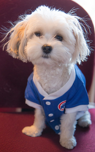 Pip is nervous. Will the Cubs pull it off?