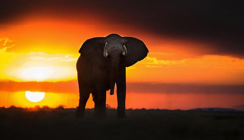 大象的黄昏_攝影蕭戈_網